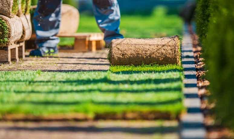 Landscape Restoration service in california